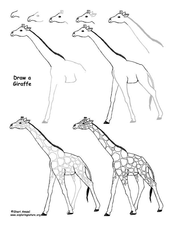 how do you draw a giraffe step by step 1001 ideas for pictures to trace for beginners and advanced you by do draw step how step a giraffe
