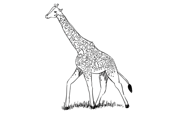 how do you draw a giraffe step by step giraffe head and neck drawing step step giraffe how draw you by do a