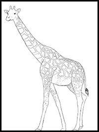 how do you draw a giraffe step by step how to draw giraffes drawing tutorials drawing how step step how a giraffe do by you draw