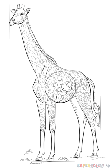 how do you draw a giraffe step by step line drawing giraffe at getdrawings free download draw step how by giraffe you step a do