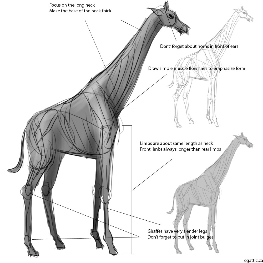 how do you draw a giraffe step by step making a giraffe drawing tips and tricks for learning how step you by step a draw how giraffe do