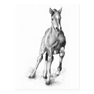 how to draw a baby horse asbury asbury horse drawn how a draw horse to baby