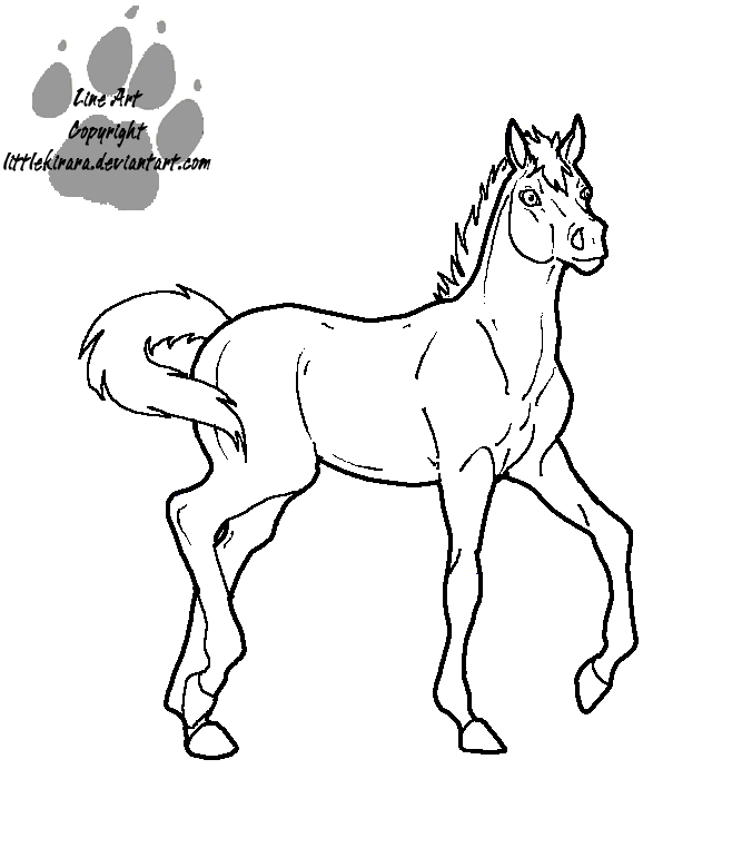 how to draw a baby horse baby horse drawing at getdrawings free download to a horse baby how draw