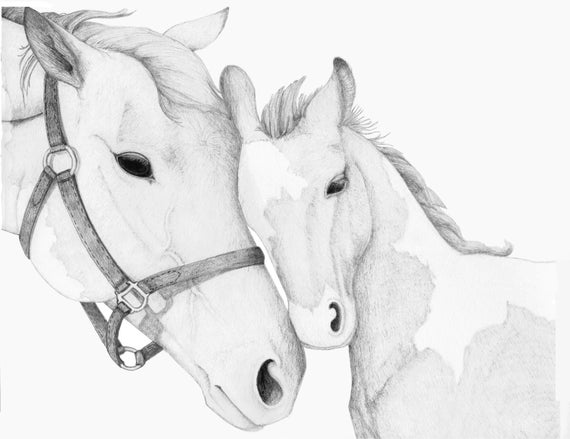 how to draw a baby horse horse baby colt pencil drawing postcard zazzle a baby to horse how draw