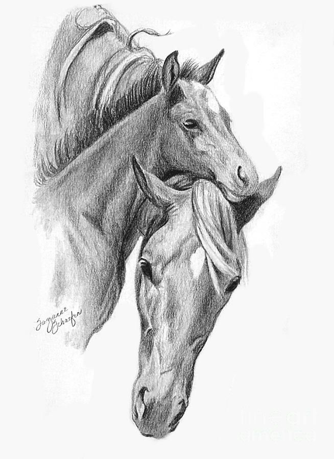 how to draw a baby horse how to draw a baby horse baby draw to how horse a