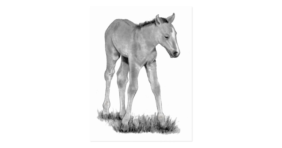 how to draw a baby horse how to draw a horse picture by koolkatz drawingnow a to how baby horse draw