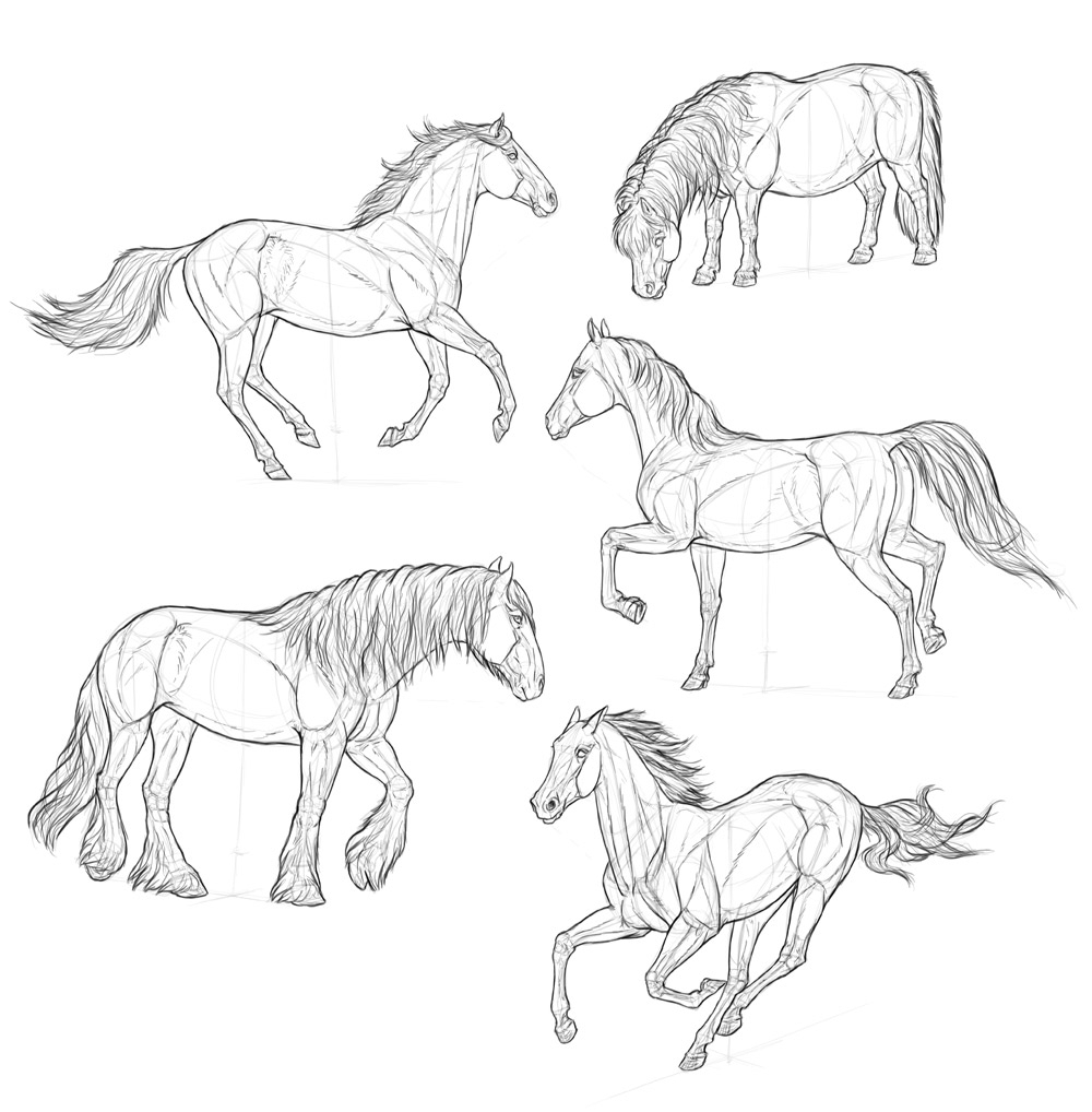 how to draw a baby horse how to draw farm animals horse drawings easy horse a horse how to baby draw