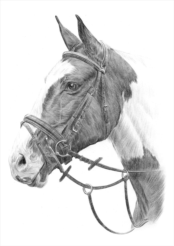 how to draw a baby horse white horse with foal by artsanddogs on deviantart baby horse how a draw to