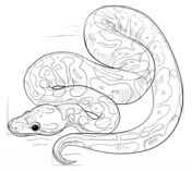 how to draw a ball python ball paintings search result at paintingvalleycom how draw a to python ball