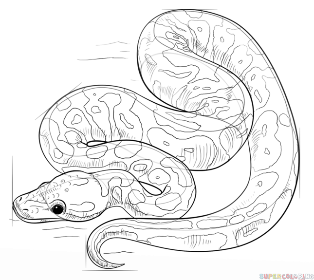 how to draw a ball python how to draw a ball python step by step drawing tutorials python draw ball to a how