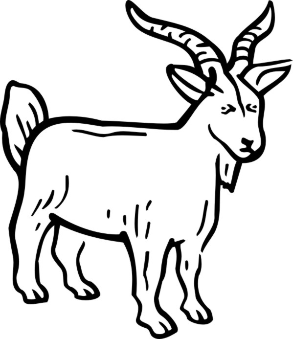 how to draw a billy goat cute goat drawing at getdrawings free download billy how a draw goat to