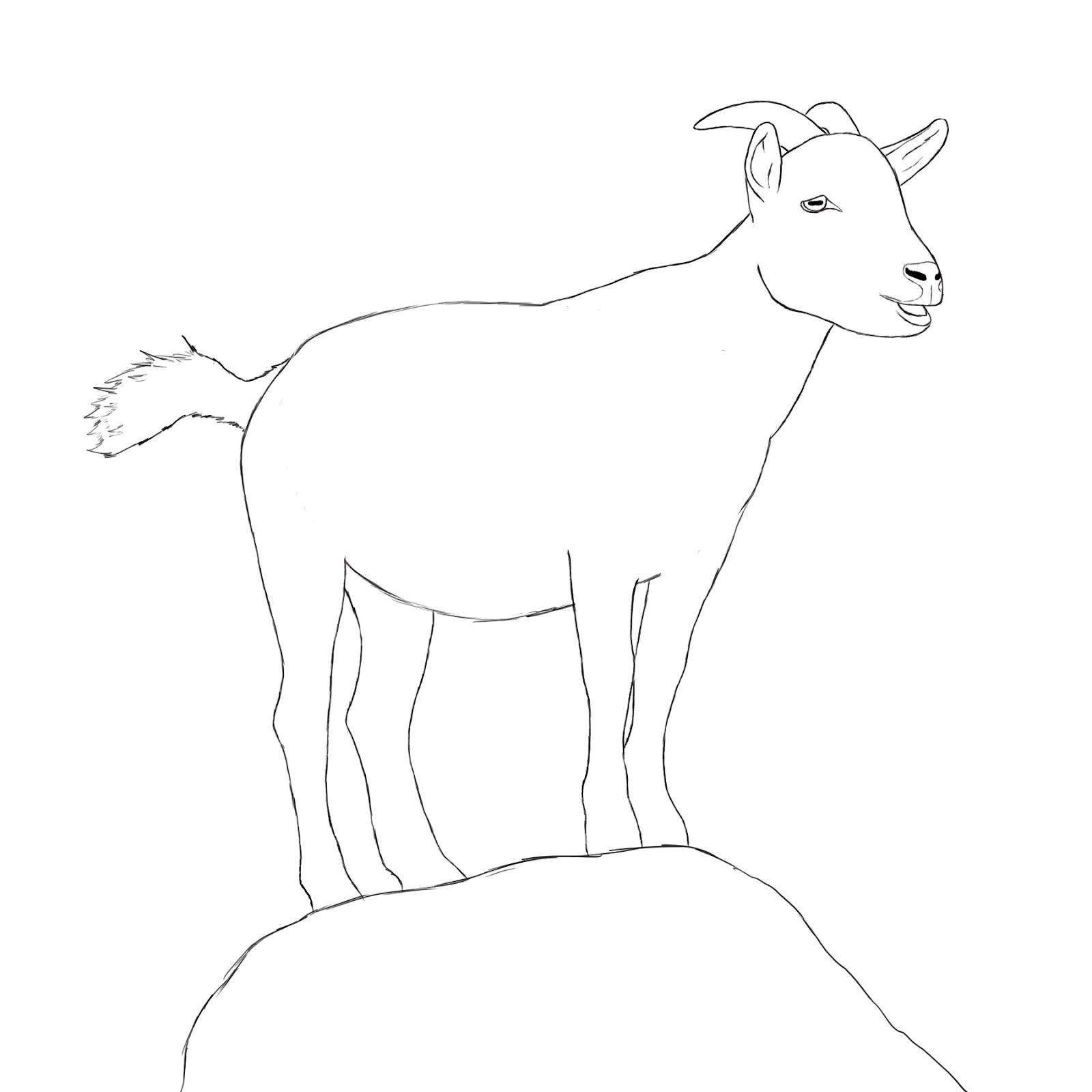 how to draw a billy goat how to draw a goat animal drawings art drawings drawings a how draw billy to goat