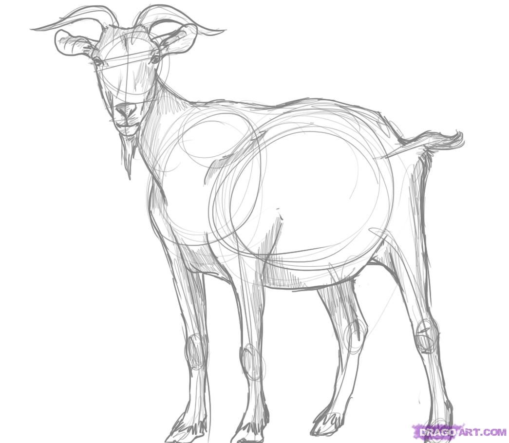 how to draw a billy goat how to draw cartoon billy goats step by step drawing goat draw how billy to a