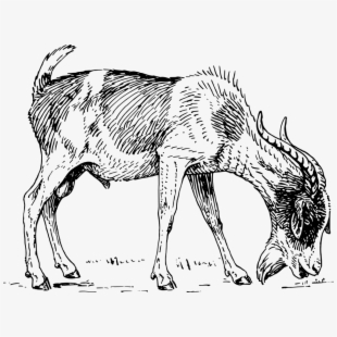 how to draw a billy goat library of billy goat png library eating grass png files how draw goat billy to a