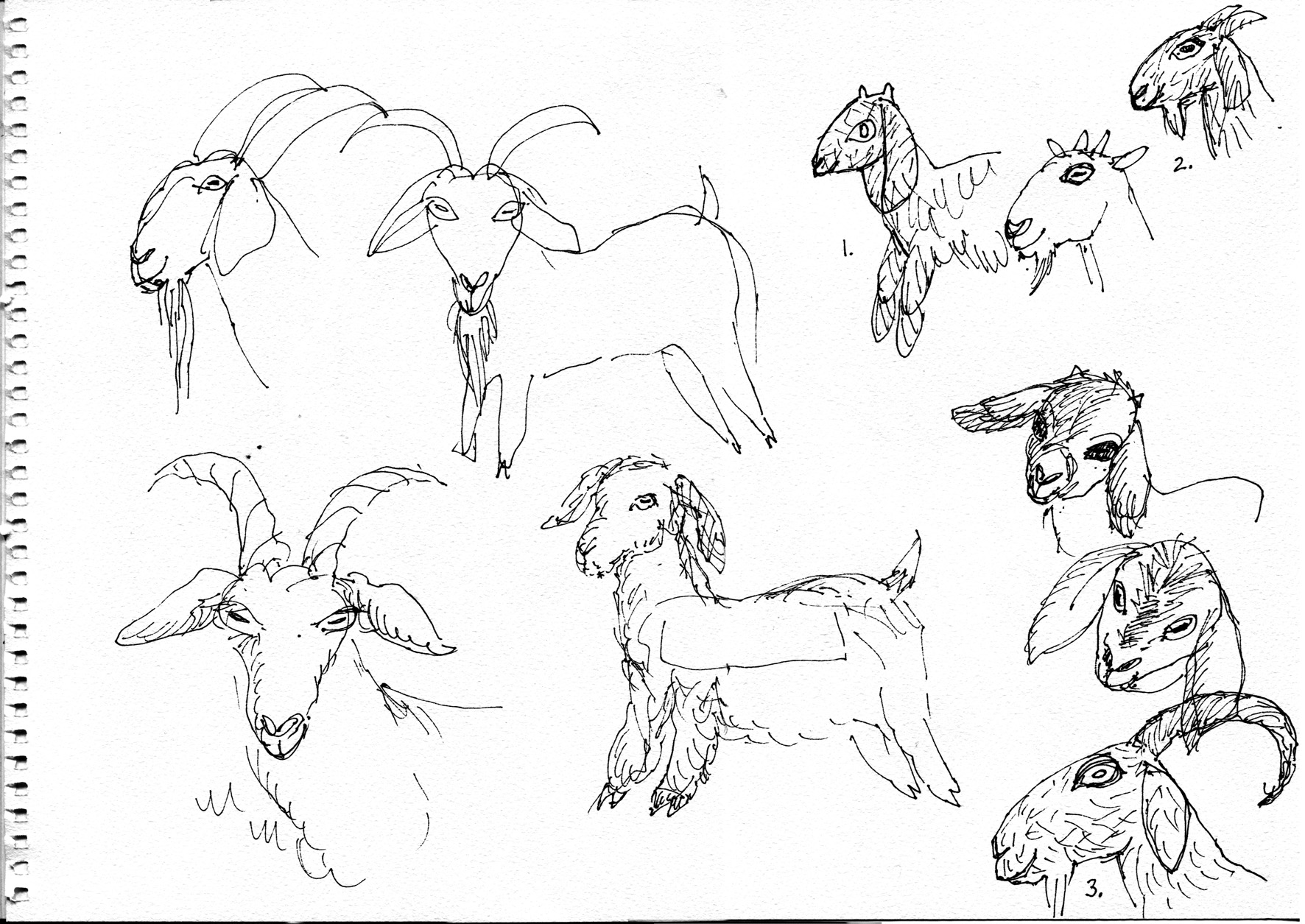 how to draw a billy goat lost puppet sketches endpapers a how billy draw goat to