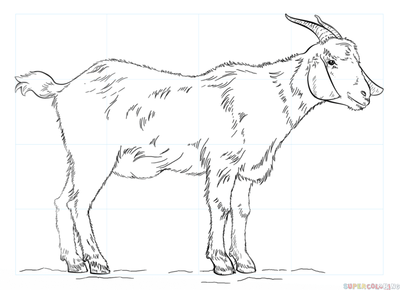how to draw a billy goat superhero body outline coloring pages draw to billy a how goat
