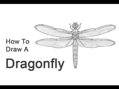 how to draw a dragonfly for kids 10 dragonfly templates crafts colouring pages free to a draw dragonfly how for kids