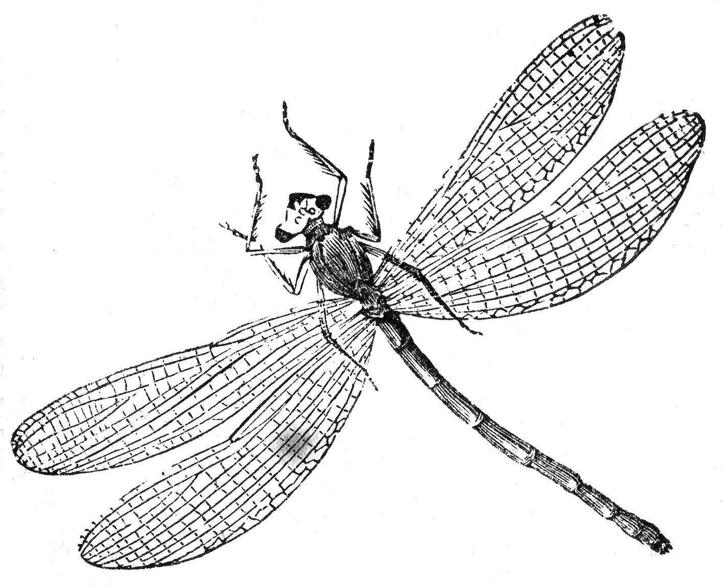 how to draw a dragonfly for kids 14 best images about dragonfly crafts for kids on dragonfly draw for how to a kids