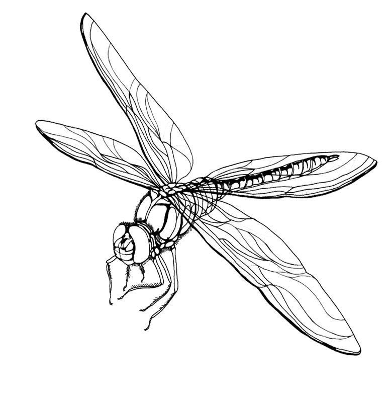 how to draw a dragonfly for kids detailed dragonfly coloring printout dragonfly cartoon kids to for a how draw dragonfly