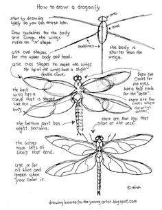 how to draw a dragonfly for kids dragonfly clipart easy draw dragonfly easy draw a dragonfly kids how draw for to