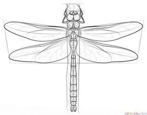how to draw a dragonfly for kids free dragon fly pattern for faux stained glass httpwww dragonfly draw how a kids for to