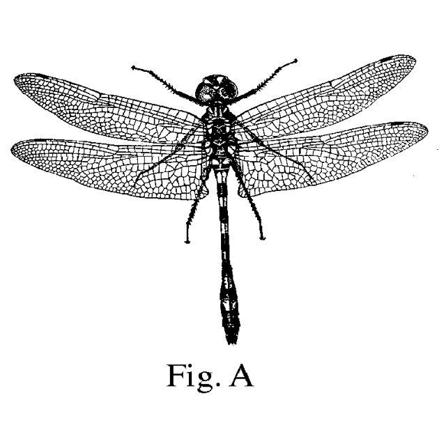 how to draw a dragonfly for kids free printable dragonfly coloring pages for kids for to kids dragonfly how draw a