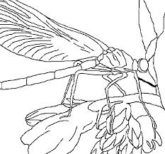 how to draw a dragonfly for kids free printable dragonfly coloring pages for kids kids to a how dragonfly for draw