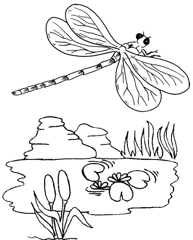 how to draw a dragonfly for kids free printable dragonfly coloring pages for kids kids to how for dragonfly draw a