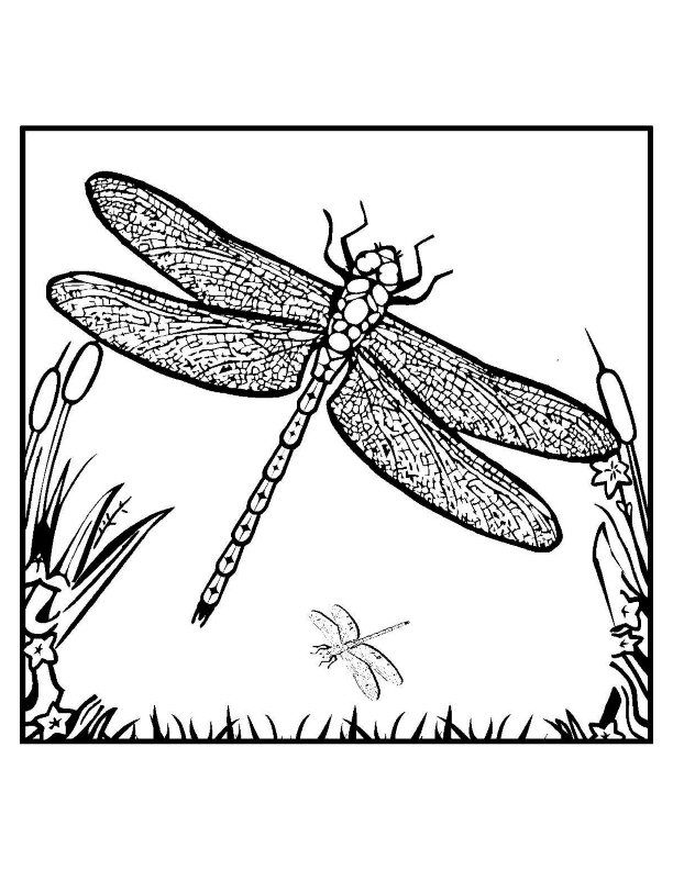 how to draw a dragonfly for kids free printable dragonfly coloring pages for kids to dragonfly kids draw how for a
