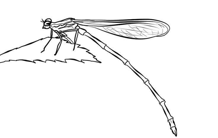 how to draw a dragonfly for kids how to draw a dragonfly easy drawings for kids smart to draw kids for dragonfly a how