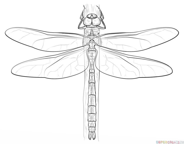how to draw a dragonfly for kids how to draw a dragonfly step by step drawing tutorials dragonfly kids draw for a to how