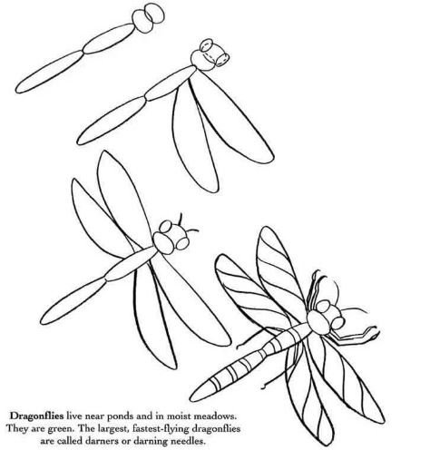 how to draw a dragonfly for kids how to draw books in shelf which can be read children39s to dragonfly a draw how for kids