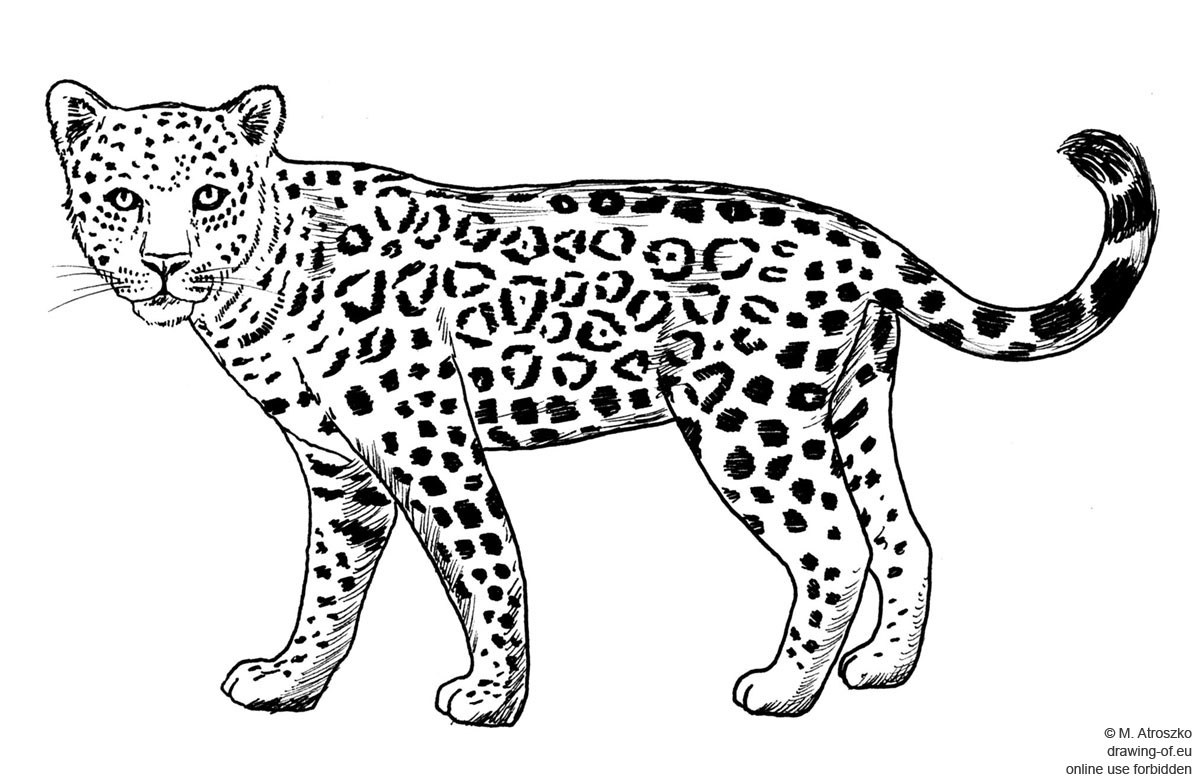 how to draw a jaguar easy jaguar drawing at getdrawings free download jaguar how draw to a
