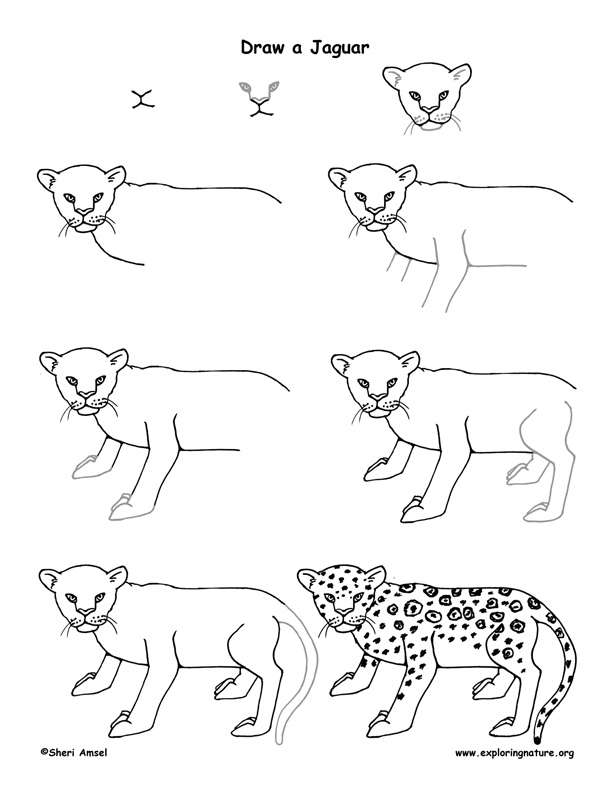 how to draw a jaguar gallery easy jaguar drawings draw to jaguar how a