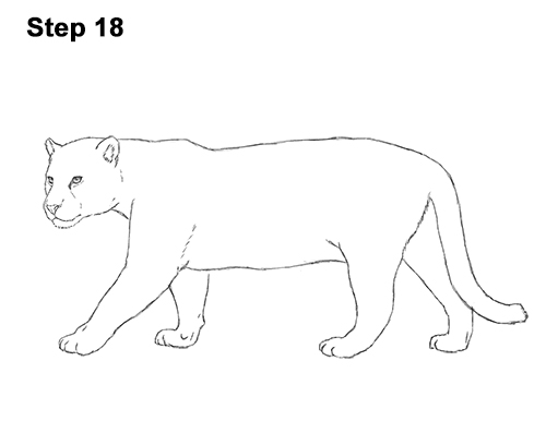 how to draw a jaguar how to draw a jaguar a to jaguar how draw