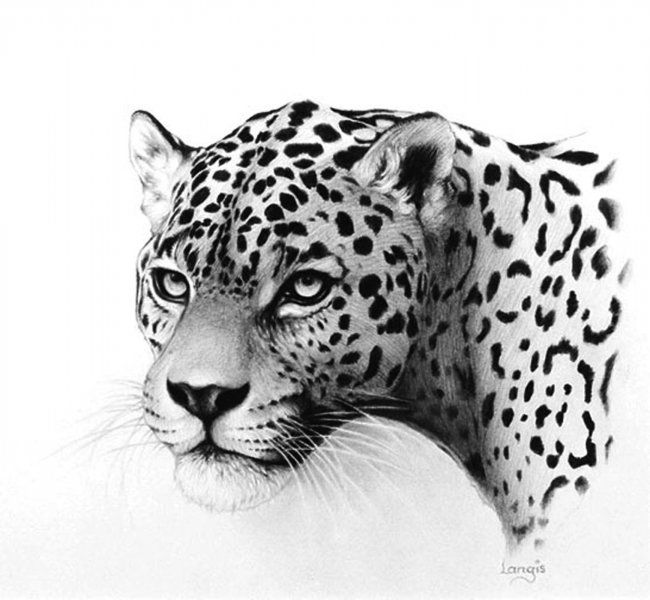 how to draw a jaguar how to draw a jaguar step 10 in 2019 drawings pencil a to draw how jaguar