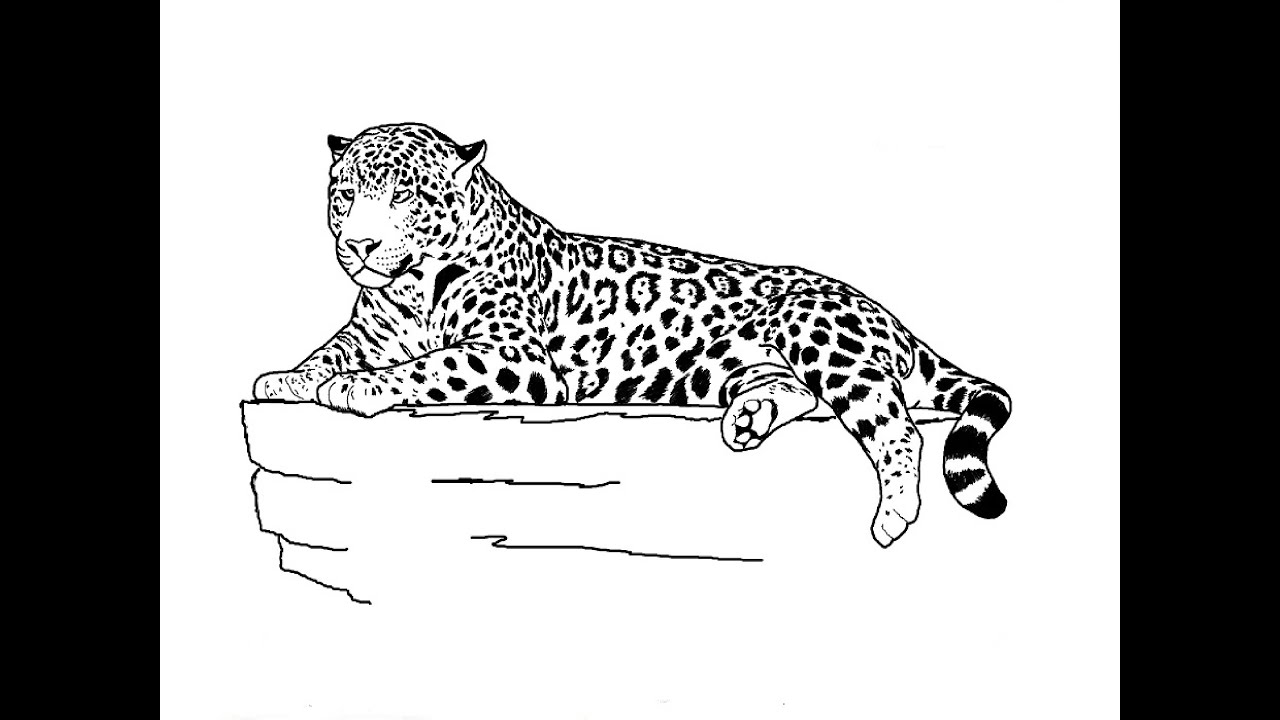 how to draw a jaguar how to draw simple learn how to draw a jaguar with a how to jaguar draw