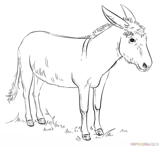 how to draw a mule 20 inspiration mule drawing easy charmimsy to draw mule a how