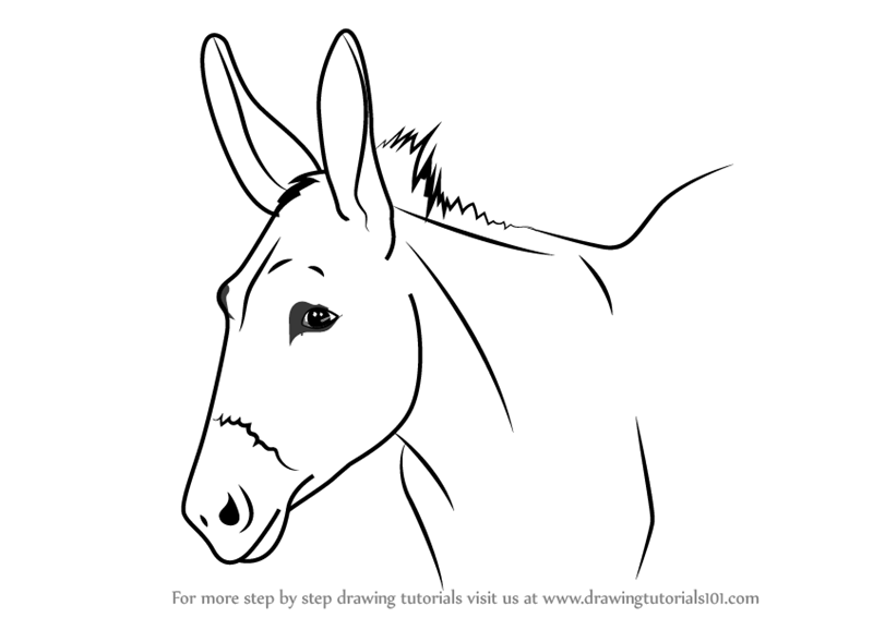 how to draw a mule deer mule drawing lesson exploring nature educational draw how a to mule
