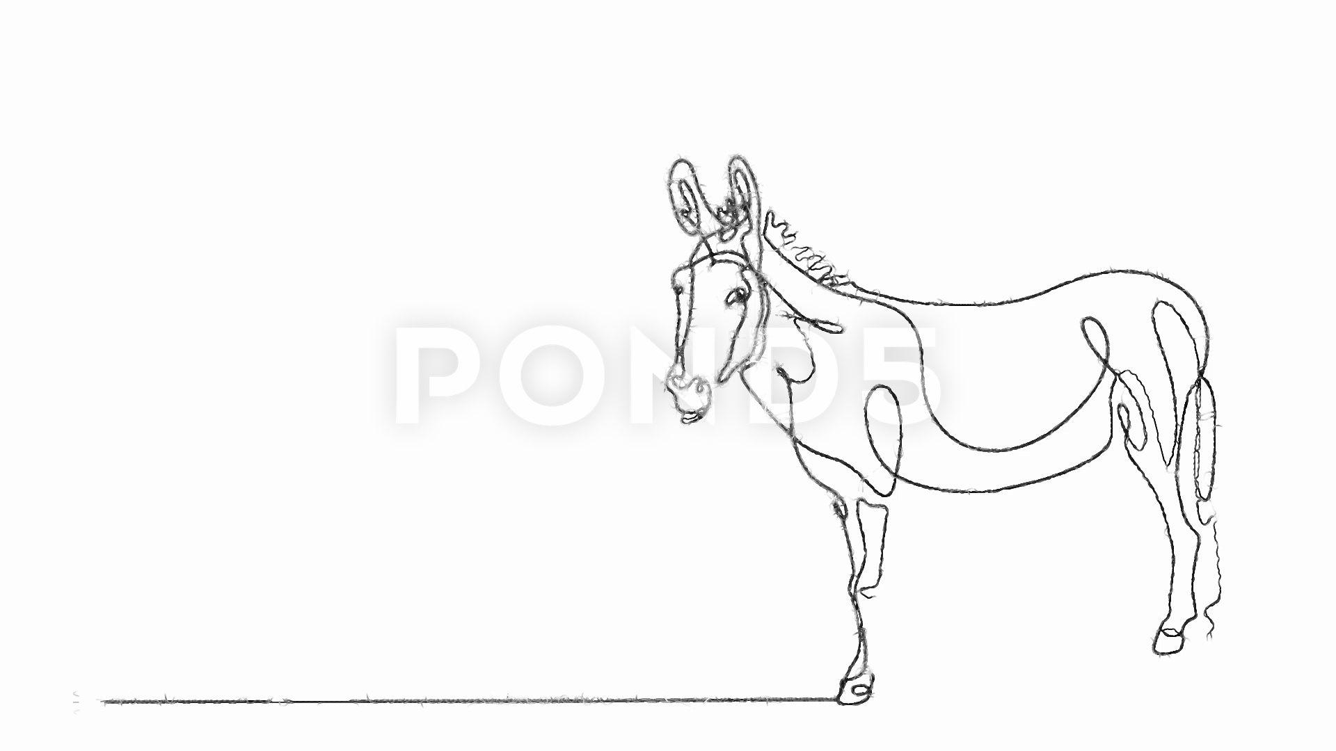 how to draw a mule donkey line drawing at paintingvalleycom explore a how draw mule to