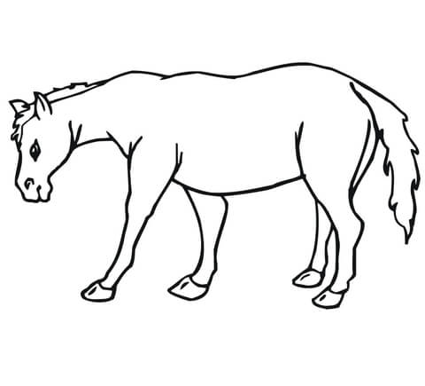 how to draw a mule how to draw a donkey step by step arcmelcom a draw to how mule