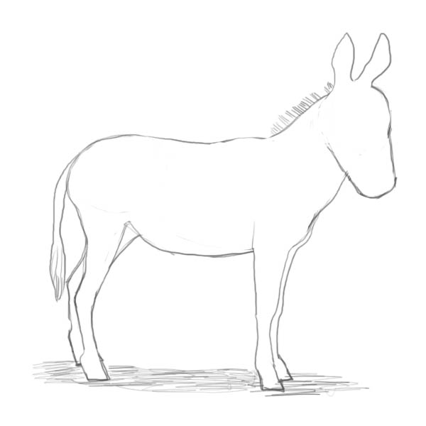 how to draw a mule how to draw a donkey step by step arcmelcom draw mule to how a