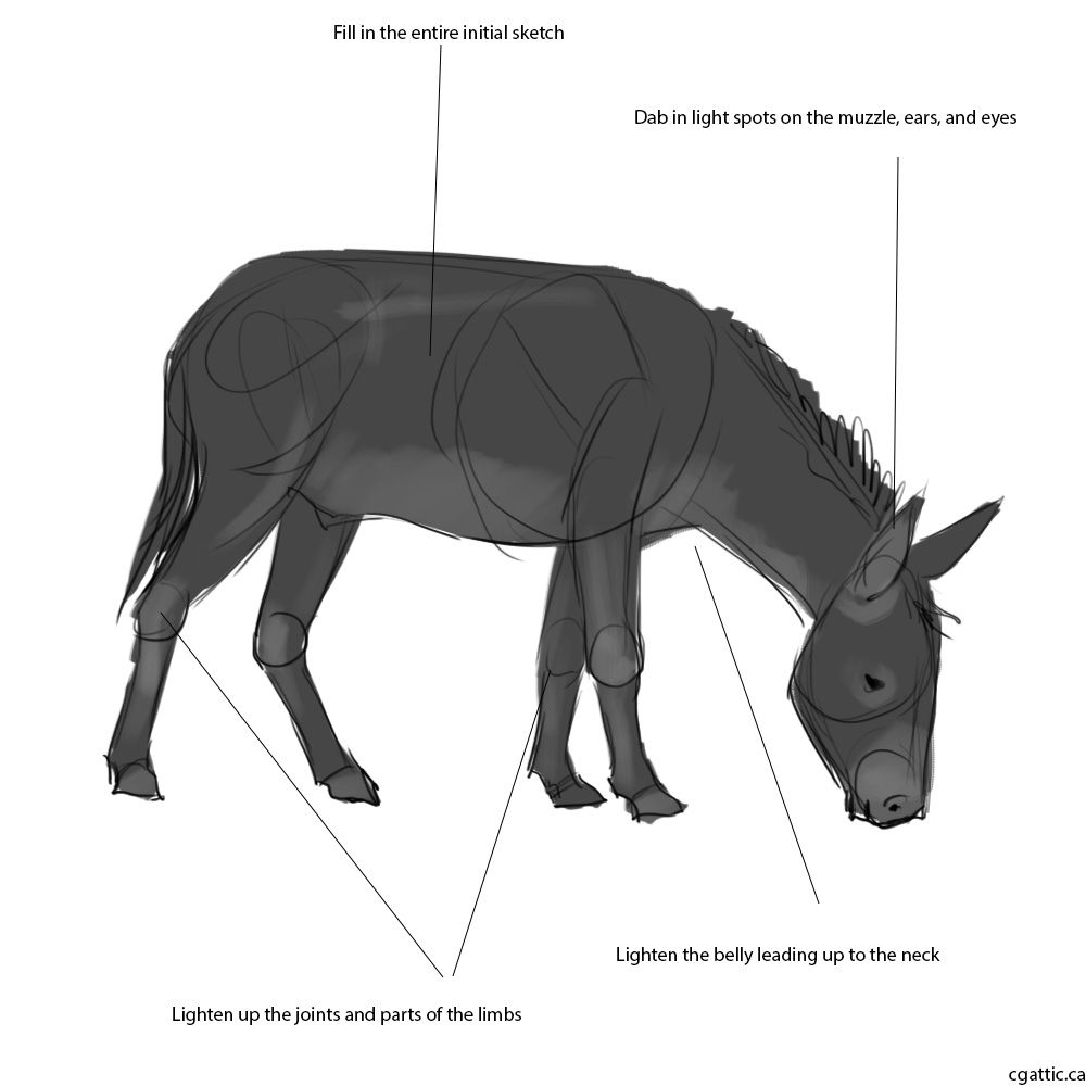 how to draw a mule how to draw a mule a to mule how draw