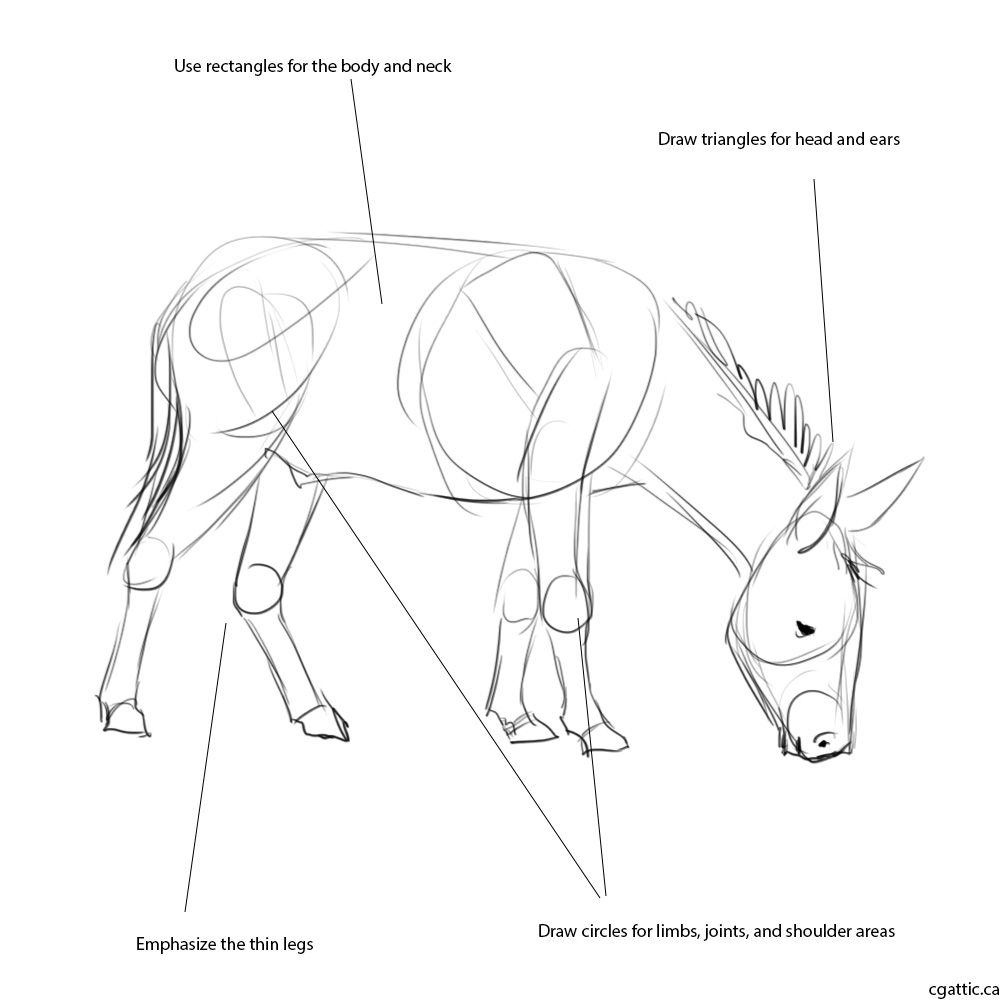 how to draw a mule mule drawing at getdrawings free download how mule to a draw