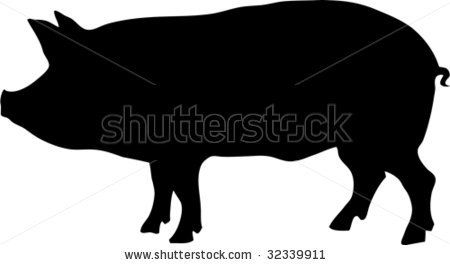 how to draw a pig standing up farmer teaching his pig born without any back legs to walk how to standing draw a up pig