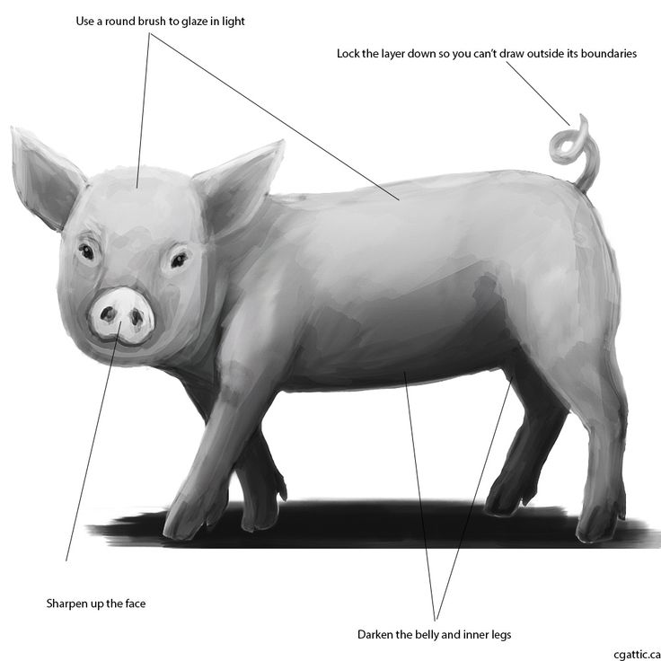 how to draw a pig standing up learn english with fairy stories and traditional tales standing how a to up pig draw