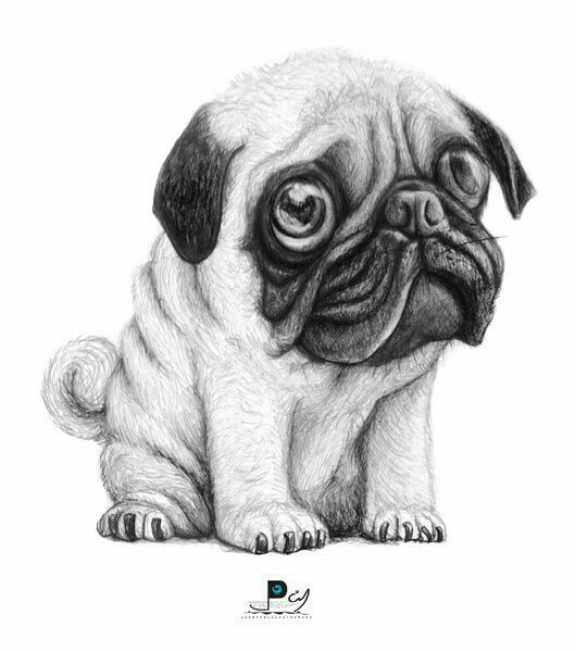 how to draw a pug cute pug dog coloring page free printable coloring pages how a draw pug to