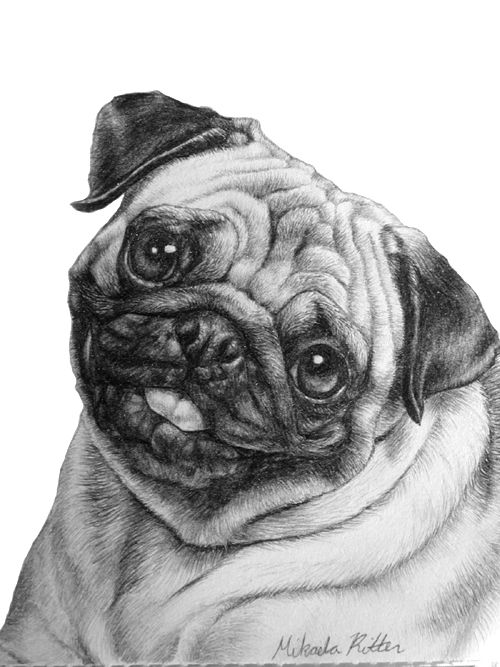 how to draw a pug how to draw pug puppies sketch coloring page puppy to how pug draw a