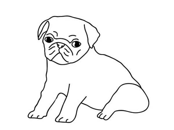 how to draw a pug pug dog pencil drawing thumbnail pug art dog pencil drawing pug a draw to how
