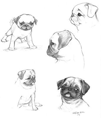 how to draw a pug pug outline drawing at paintingvalleycom explore draw how a pug to